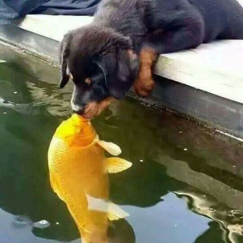 Koi and Dog