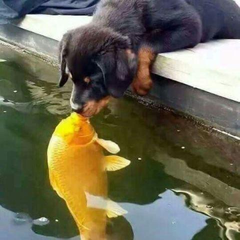 Koi and Dog